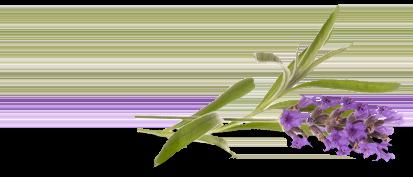 lavend