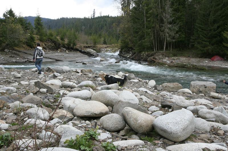 rozwidlenie rzeki białki